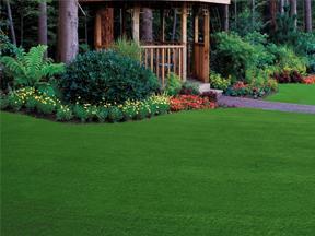 Free Zoysia Grass Plugs Com